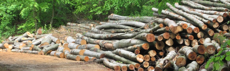 Lieblings Bürgergemeinde Seltisberg - Holzbestellung - Gabholz @WB_31